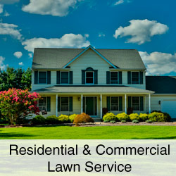 Residential and Commercial Lawn Service